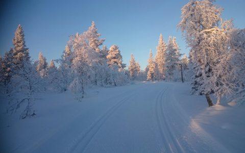 Langlaufwochen in Lappland