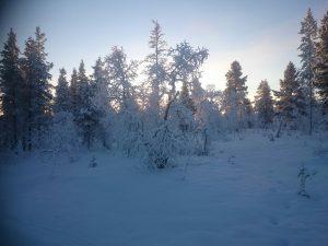 Lappland (15)