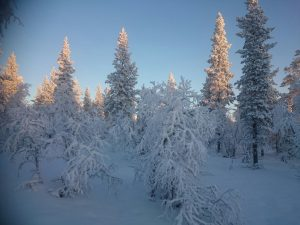 Lappland (16)