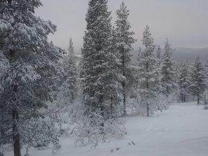 Lappland (33)