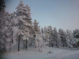 Lappland (37)