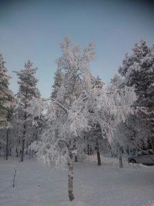 Lappland (38)